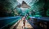 Oh the Wonder - 1312-_MG_9550 (Robert Rath) Tags: travel wonder aquarium shark sydney sealife marinelife sydneyaquarium shovelnoseshark sealifesydneyaquarium