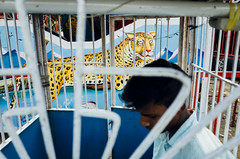Behind Bars (Shubh M Singh) Tags: street india animal cat big bars humor leopard gr behind ricoh imprisoned mumour