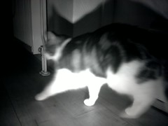 20160208-021730-i-1 (Catflap central) Tags: camera dog pet cats woof cat pi raspberry meow doggie catdoor catflap kattenluik katzenklappe catflapj2nnl taggingasdoguntilautotagginghasanoptout robotaggingisthedevil