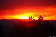 new set: sunrise with rain (X) (T.Flat ) Tags: morning maana sunrise germany deutschland mood alba frankfurt bonito mooi hermoso morningglory sonne sonnenaufgang allemagne morgen sabah frankfurtammain stimmungsvoll soluppgng matin manh morgens zonsopgang rano morgon nascerdosol mattina soloppgang bello gzel   morgenlicht sunrising salidadelsol vacker aamu wunderschn auringonnousu smukke kaunis gndoumu krsn leverdusoleil frumos solopgang pikny fallegur morgun slarupprs vakker svtn wschdsoca    dopoledne rsrit sonnenstimmung  diminea