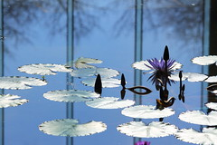 waterlily (* Yumi *) Tags: flower reflection waterlily
