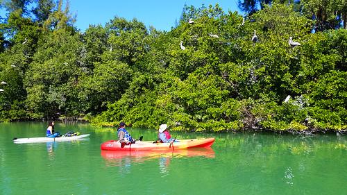 2_10_16 Kayak Paddleboard Tour Sarasota FL 20