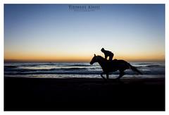 Running (Vinc91) Tags: blue sea sky italy horse beach nature landscape landscapes italia running sicily sicilia