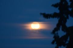 Today's full moon (Kotsikonas Elias) Tags: sky moon outdoor athens luna fullmoon greece autofocus astrometrydotnet:status=failed astrometrydotnet:id=nova1452909