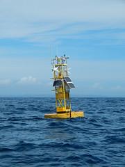 Plymouth-201506-56-OffshoreMonitoringStation-PML (Tony J Gilbert) Tags: macro marine underwater plymouth diving scylla jameseaganlayne nikond300 handdeeps wwwdivingplymouthcom ceeking hilseapointrocks