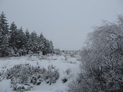 IMG_8583 (Bike and hiker) Tags: winter mist hiver sneeuw neige venn hoge hautes fagnes venen hohes botrange neur bayehon low