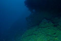Deep wall (ianc7777) Tags: leica sony submarine stanley karl roatan exploration institue deepsea idabel trielmar a7rii