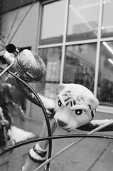 Snow Tiger (Georgie_grrl) Tags: friends blackandwhite toronto ontario bicycle bell tiger photographers social rawr pentaxk1000 horn outing grrrr bikingtoronto rikenon12828mm changeyourliferideabike torontophotowalks seatonvillagesaturdayscramble topwsvss