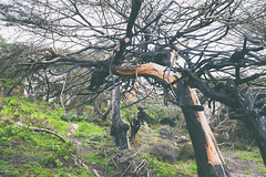 Tangled In You (Pixelina Photography) Tags: sf sanfrancisco california trees tree canon fire branches sanfranciscobayarea 5d limbs dslr westcoast digitalphotography canonphotography canoneos5dmarkll 5dmarkll eos5dmarkll