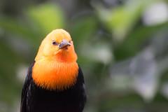 (abritinquint Natural Photography) Tags: nikon 300mm telephoto nikkor luxembourg parc f4 bid vogel pf tc14eii 300mmf4 teleconvertor merveilleux parcmerveilleux d7200 pfedvr