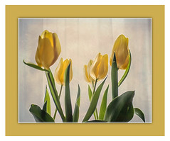 sending you some tulips (bonnie5378) Tags: flowers tulips ngc naturescarousel