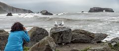 Getting the Shot (snowpeak) Tags: seagulls seaarch ladigue99 sonycybershotrx100iii