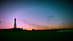 Dawn murmuration (Lumen8.) Tags: uk england beach birds silhouette sunrise dawn pier britain beetle lancashire coastline blackpool starlings murmuration blackpooltower 760d