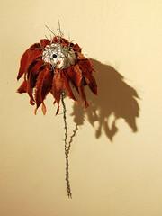 Die Blume der Anderen (_tess_) Tags: exhibition tess graz minoriten