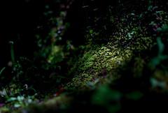 Moss whispers silently - Nikon D3s & Nikon AF-S Nikkor 24mm f/1.4G ED (TORO*) Tags: blur green field japan ed moss nikon bokeh outdoor f14 14 kobe 24 24mm af nikkor depth afs hyogo f14g sorakuen sourakuen d3s sohrakuen