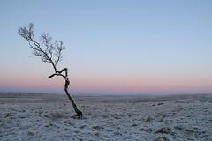 Cool April Dawn (Derbyshire Harrier) Tags: pink snow cold dawn frozen frost derbyshire peakdistrict april nationaltrust silverbirch moorland 2016 rspb peakpark bigmoor easternmoors