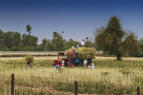 Landwirtschaft in Indien