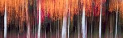 Fall (rubberducky_me) Tags: trees red orange usa white abstract fall film america velvia northamerica linhof wyoming aspen grandteton grandtetonnationalpark linhoftechnorama