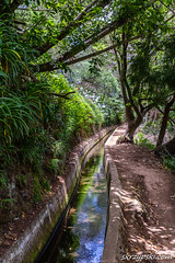 Levada walks (Mieczysaw Skrzypski) Tags: travel trees tree portugal water forest way landscape madera track outdoor walk system route trail madeira levada 2015