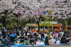 Hanami at Kitain, Kawagoe (AnotherSaru - Limited mode) Tags: japan japanese spring gathering  sakura cherryblossoms kawagoe hanami  blooming saitamaken  2016   saitamaprefecture kawagoeshi