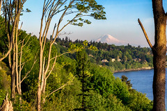 Discovery Park (matthucke) Tags: seattle mountrainier rainier discoverypark seattleparks