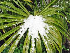 April, April (Jorbasa) Tags: schnee snow germany deutschland hessen april wetterau eiswrfel graupelschauer jorbasa showerofsofthail