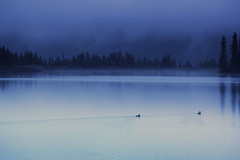 Ducks (Mister Day) Tags: morning blue mist canada water rain reflections ducks reservoir alberta canmore purplerain drizzle