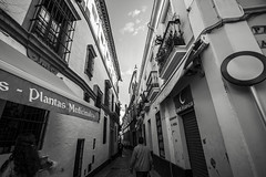 Street in Seville #2 (BoXed_FisH) Tags: street city travel blackandwhite bw monochrome architecture mono sevilla andaluca spain europe sony wideangle monotone seville housing es archtitecture sonyalpha sonyzeiss zeiss1635 sonya7 sel1635z sony1635mmvariotessartfef4zaoss sonyzeiss1635f4oss giraldabelltowel