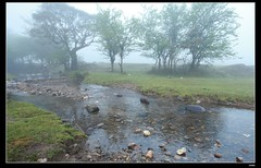 IMG_1363 (c0466art) Tags: light beautiful grass fog creek canon landscape scenery atmosphere mysterious land 1dx c0466art