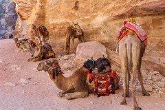 breaktime for the working camels of Petra, Jordan (Phil Marion) Tags: travel wedding boy vacation people woman hot sexy ass beach girl beautiful beauty sex canon naked nude nipples slim boobs nu candid dick young hijab nackt explore teen tranny xxx chubby plump  burqa nudo desnudo dink  nubile telanjang schlampe    5photosaday explored  thn nijab    kha    malibog    philmarion         saloupe