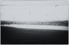 IMGP5661fx28 (hans fotografeert) Tags: seagulls white kite black holland pentax tamron emptiness 28300mm k5 28300 ijmuiden ijmuidenholland ijmuidenhollandbw seagullsandakiteatthebeach