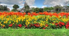 priory flowers (kathryn Wilkins) Tags: essex southend priorypark
