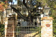 The gates to The Castle and the large Oak (Black.Doll) Tags: tree architecture oak southcarolina haunted southern liveoak thesouth 1850s beaufort beaufortcounty italianrenaissance