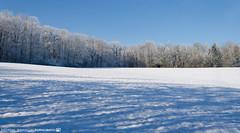 On a beautiful Winter Day. (andreasheinrich) Tags: winter cold germany landscape deutschland frozen snowy verschneit january felder fields kalt landschaft forests badenwrttemberg gefroren wlder neckarsulm nikond7000