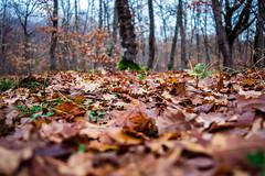 Foglie (DarioMarulli) Tags: trees fall nature foglie alberi nikon natura autunno abruzzo bosco laquila d3200 nikonclubit