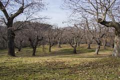 WOODS (my_secret_window81) Tags: autumn leaves foglie landscapes woods chestnut autunno appennino bosco castagne maroni castagni