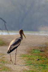 WJ9A8338 (Tarun Chopra) Tags: travel india canon photography indiatravelphotography gurugram