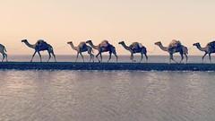The sites of Ethiopia (farflungistan) Tags: christmas travel ethiopia camels 2016 mobilevideo