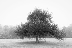 something in the way (sephrocker) Tags: trees blackandwhite nature landscape peace monochromatic dreamy