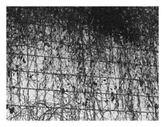 (Gene Daly) Tags: newyorkcity blackwhite canonfd50mmf18 chromenose genedaly olympusem5 p2070156