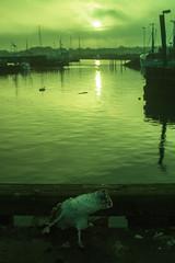 Bnnerup Strand (Juliet Alpha November) Tags: winter sunset sun strand port dead denmark boot death boat ship sonnenuntergang sundown jan harbour seagull mwe tot dnemark danmark tod schiff djursland bnnerup meifert