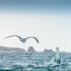 Du vente dans les ailes (Gilles83100) Tags: sea mer seascape bird island wind wave cte vague isle oiseau mouette windsurf le