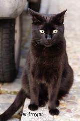 Los ojos de un gato negro (mArregui) Tags: madrid nikon negro gato villaviciosa gatonegro villaviciosadeodn odn d5100 nikond5100 wwwarreguimeluscom marregui