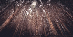 Distorted Forest (Augmented Reality Images (Getty Contributor)) Tags: longexposure trees winter distortion pine forest canon landscape scotland perthshire wideangle leefilters