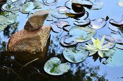 DUY_9323 (Anh Duy Mai) Tags: wood flowers lake nature forest nikon sigma peaceful vietnam tay highland area dalat nguyen pleiku kontum d7000