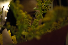 Through spring (alexwinger) Tags: flower green eye girl yellow bouquet