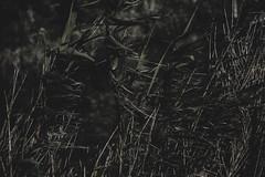 . (sugus.) Tags: nature weeds nikon 18105mm