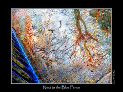 Next to the Blue Fence / A ct de la Barrire Bleue (Luna TMG) Tags: tree rain fence watercolor aquarelle pluie arbre barrire
