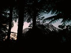 Bosque Andino Colombiano (PabloCastro.) Tags: sunset sunshine atardecer colombia bosque andes andino medelln antioquia colombiano antioqueo vsco vscocam