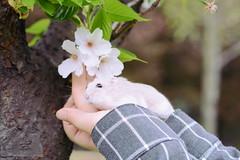 DSC_6682 () Tags: pet animal hamster